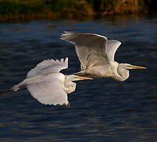 Great White Egrets II by Marvin Collins