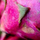 Dragonfruit by Gary Chapple