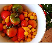 We're all tomatoes here.... Photographic Print