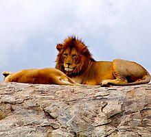 Lion King and Queen by Ellen Rosen Singer