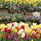 BOWRAL TULIP FESTIVAL  by briangardphoto