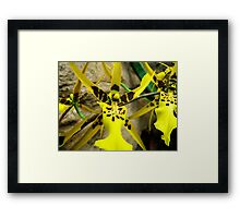 Orchid Collection - 13 Framed Print