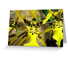 Orchid Collection - 13 Greeting Card
