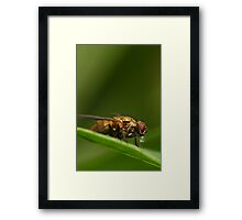 Fly on a leaf 2 Framed Print