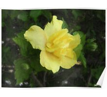 Double Yellow Hibiscus 1 Painterly Poster