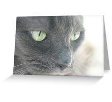 My Amazing Wonderful Little Cat (2) Greeting Card