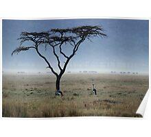 Golden-crowned Cranes - Lake Nakuru Reserve, Kenya Poster