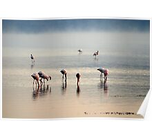 Flamingos on Lake Nakuru - Kenya, Africa Poster