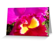 Orchid Collection - 19 Greeting Card