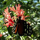 butterfly kisses by Loretta Marvin