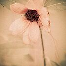 Delicate Pink by Pat Moore