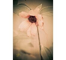 Delicate Pink Photographic Print
