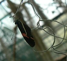 butterfly in conservatory by LisaBeth
