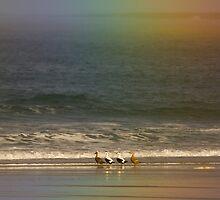Rainbow with Eider by Nigel Tinlin