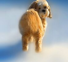 Believe it or Not Im Walking on Air by ✿✿ Bonita ✿✿ ђєℓℓσ