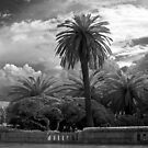 A Palm in Otoranto by Rene Hales