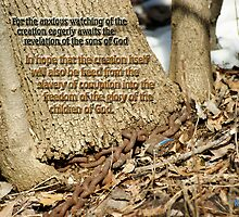 Awaiting Freedom from Slavery ~ Romans 8:19,21 by Robin Clifton
