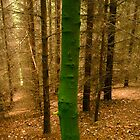 Green Tree 2 by Richard Butler