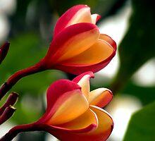 Hawaiian Orchid by Stephen  Saysell