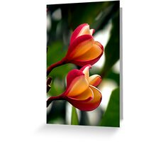 Hawaiian Orchid Greeting Card