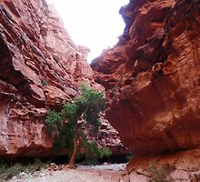 Canyon Tree by BoddyHiker