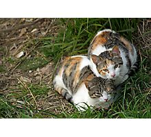 Cat couple Photographic Print