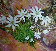 Flannel Flowers, Blue Mountains, Australia by Lynda Earley