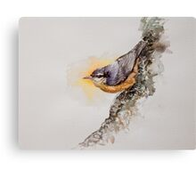 little bird nuthatch Canvas Print
