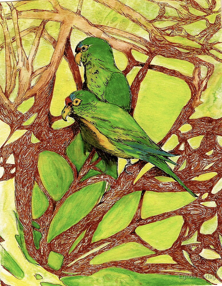 Orange-Fronted Parakeets, Casa Caprichito, Mexico by Lynda Earley