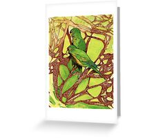 Orange-Fronted Parakeets, Casa Caprichito, Mexico Greeting Card