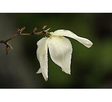 Yucca Blossom Photographic Print