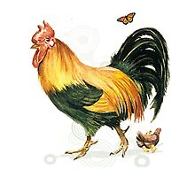 Mr Big. Handsome orange and green rooster Photographic Print