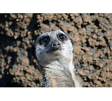 Amusing Meerkat Photographic Print