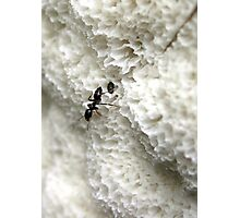 Ants On A White Landscape Photographic Print