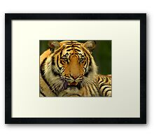 If Looks Could Kill Framed Print