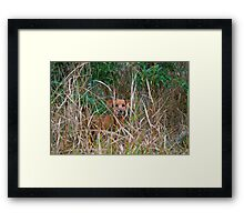 Yeah, what? (Oscar in the woods) Framed Print