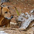 Oscar surveys piney woods by Ben Waggoner