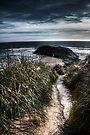 The Forgotten Island by Andrew Simoni