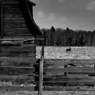 A horse named Goldstar (BW) by JamesA1