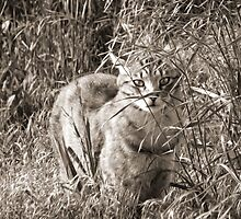 Curiosity by BPhotographer