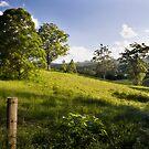Rolling hills of Bellingen by Adriana Glackin