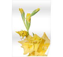 yellow watsonia isolated on white Poster