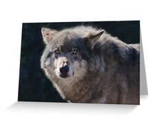 Canis Lupus in Rotterdam Greeting Card
