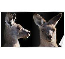 Kangaroo Profile Poster