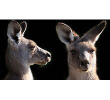 Kangaroo Profile Photographic Print