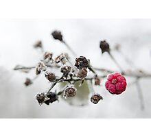Frozen Raspberry Photographic Print