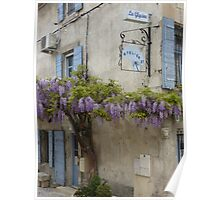 Flowering wisteria St Remy Provence Poster