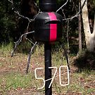 Redback on the toilet seat? by waxyfrog