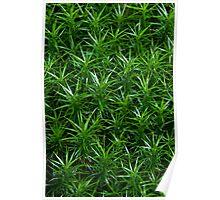 Moss pattern Poster