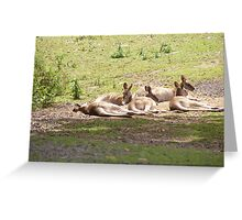 Typical Australia Greeting Card